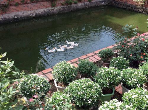 Biệt thự nhà vườn đẹp  2