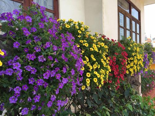 Biệt thự nhà vườn đẹp  4