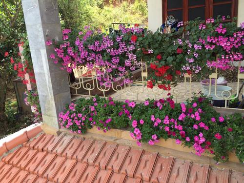 Biệt thự nhà vườn đẹp  5