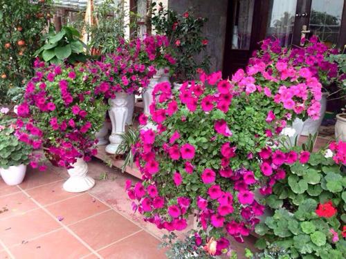 Biệt thự nhà vườn đẹp  6