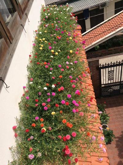 Biệt thự nhà vườn đẹp  7