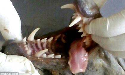 quái vật, quái vật biển, sinh vật biển