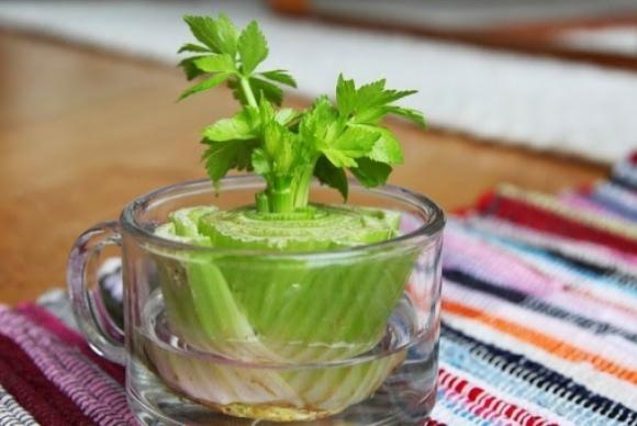 rau, các loại rau, các loại rau sống dưới nước, rau xanh, rau trồng trong cốc nước
