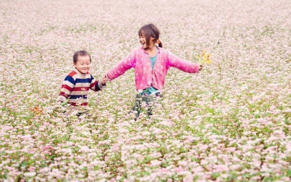 thời gian tỏ chức lễ hội hoa tam giac mạnh 10/2015