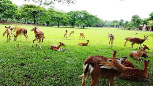Vườn Xoài, Khu du lịch sinh thái Vườn Xoài, Du lịch sinh thái
