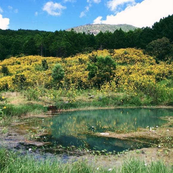 hoa da quy, hoa dã quỳ, du lịch, tháng 10, du lịch mùa thu, hoa dã quỳ đà lạt