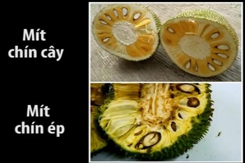 không bị tẩm hóa chất, mít, phân biệt mít sạch, chọn hoa quả sạch