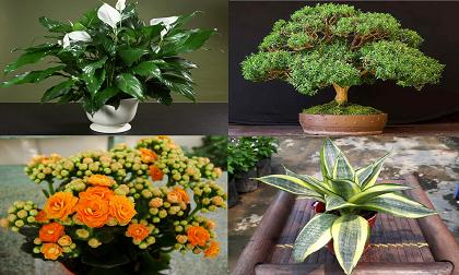 cây lọc không khí, cây tốt trong phòng ngủ, cây cảnh, cây trong nhà, cây giúp ngủ ngon