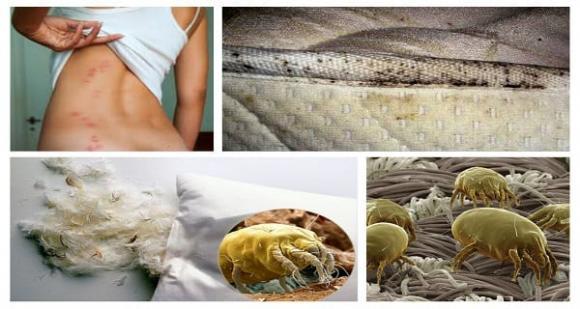 vi khuẩn trên giường  0