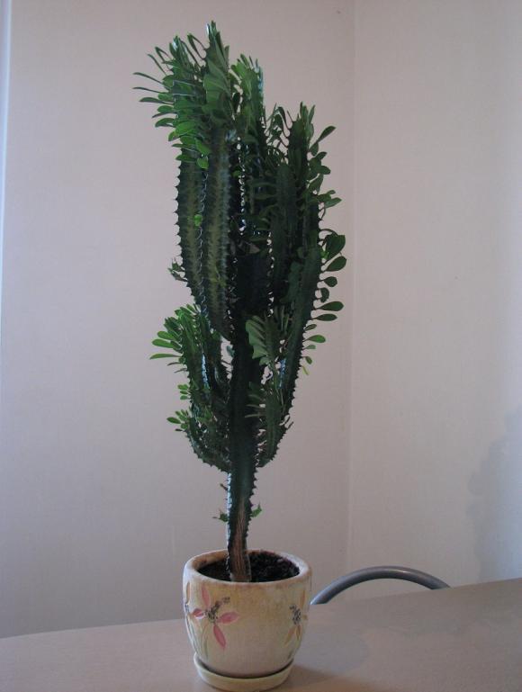 cây độc hại, có hại cho trẻ, cây không tốt, cây cảnh