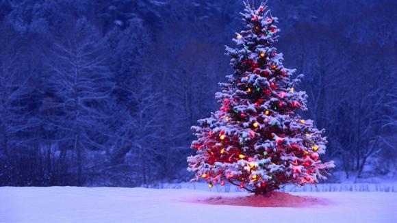 noel, noel 2016, cây thông noel, bí mật về cây thông noel, giáng sinh