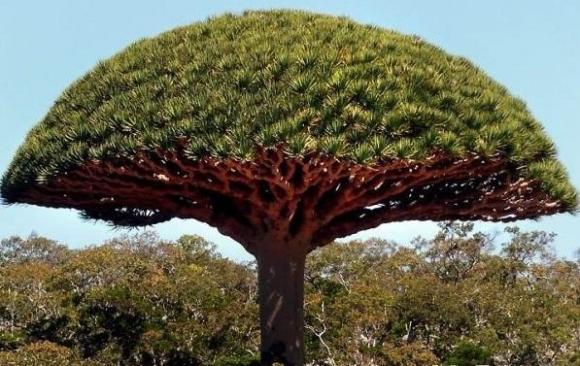 thế giới thực vật, thực vật, kỷ lục thế giới thực vật, kỷ lục