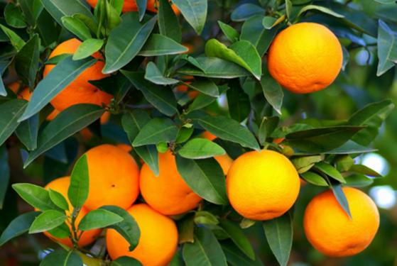 Ăn 8 loại trái cây này, bạn sẽ không lo bị ung thư vú
