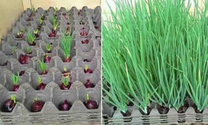 phân bón hoa, cách trồng hoa, phân bón hoa tự nhiên