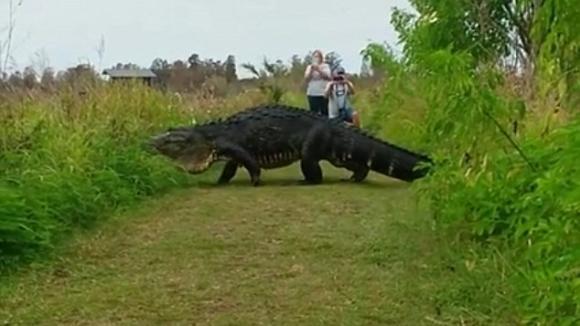 cá sấu khổng lồ, cá sấu, khủng long, cá sấu to như khủng long
