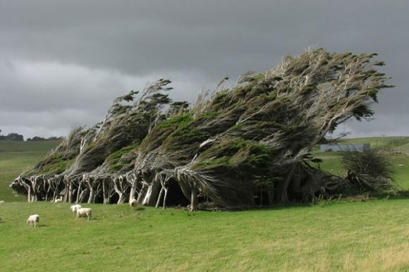 cây khổng lồ, cây đẹp nhất thế giới, loại cây đẹp nhất thế giới, hoa tử đằng, đỗ quyên, hoa anh đào