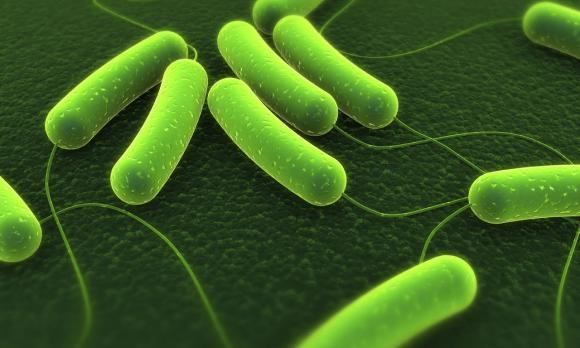 sức khỏe,chăm sóc sức khỏe,nhiễm virus,cảnh báo sức khỏe,vi khuẩn ăn thịt người,mụn cơm,tắm nơi công cộng,tắm ở nơi tập gym
