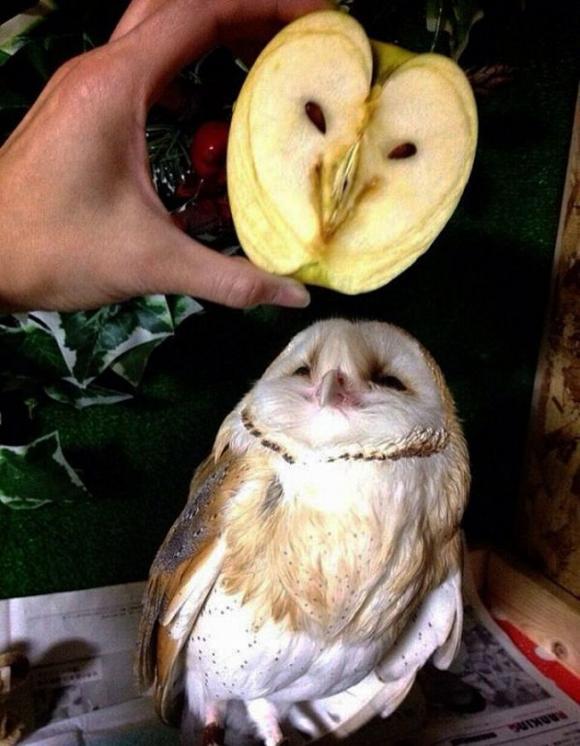 cười,ảnh cười,cặp song sinh khác loài
