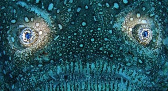 khuôn mặt kinh dị, khuôn mặt kinh dị trên bãi biển, cá kì lạ, cá Stargazer