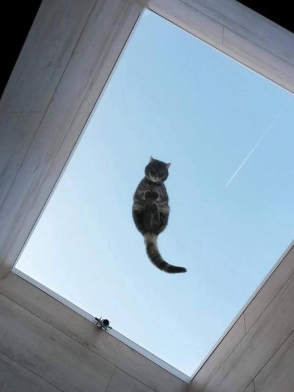 ảnh cười, ảnh cười về mèo, nuôi mèo, lý do không nên nuôi mèo, truyện cười