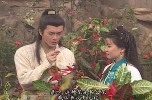 sao Hoa ngữ,Dương Quá,Cổ Thiên Lạc,Tiểu Long Nữ,Lý Nhược Đồng