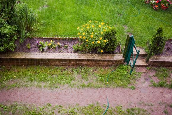 chăm sóc cây, kỹ thuật chăm sóc cây, chăm sóc cây mùa mưa lụt