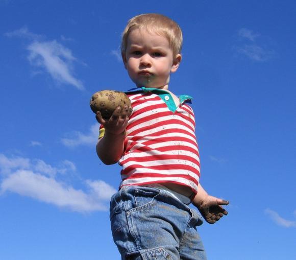 Đối phó với thói ăn vạ của trẻ bằng 'thủ thuật khoai tây'