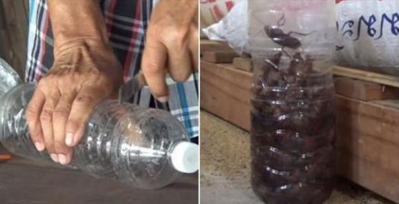 cách bắt cả họ nhà gián, cách bắt gián, bắt gián bằng 1 vỏ chai nhựa cực đơn giản