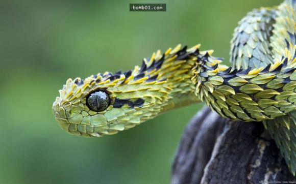 chuyện lạ 4 phương,động vật,động vật hoang dã,thế giới tự nhiên,thiên nhiên kỳ thú