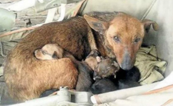chú chó cứu sống em bé, chó cứu người, chú chó Way cứu người,tin tức,tin trong ngày