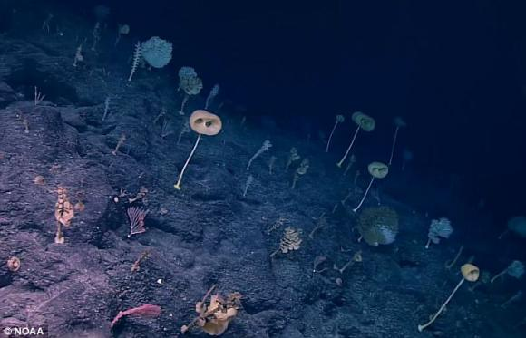 chuyện lạ, kỳ quặc, khu rừng dưới đáy biển, khu rừng dưới đáy biển 2000m, rừng dưới đáy biển,chuyện lạ 4 phương