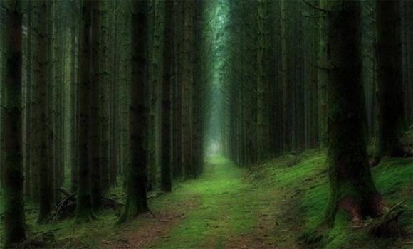 khu rừng, khu rừng đẹp, rừng đẹp như cổ tích,du lịch,du lịch nước ngoài