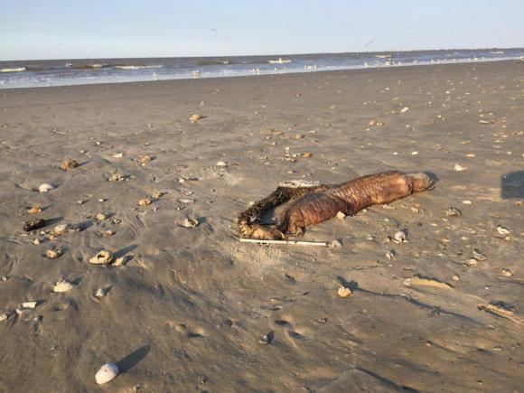 kỳ quặc, chuyện lạ, sinh vật kỳ lạ, sinh vật kỳ lạ dạt vào bờ biển, quái vật biển,chuyện lạ,chuyện lạ 4 phương