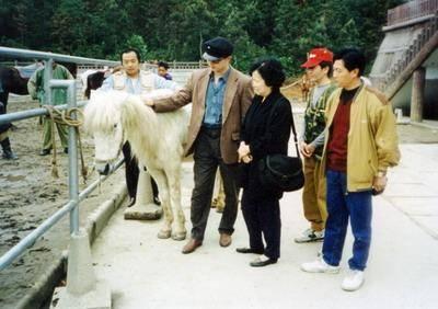 Sau 'Tây du ký' chú ngựa Bạch Long Mã bị đối xử vô cùng tàn tệ
