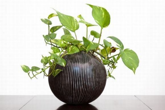 phong thủy, cây trồng, thực vật