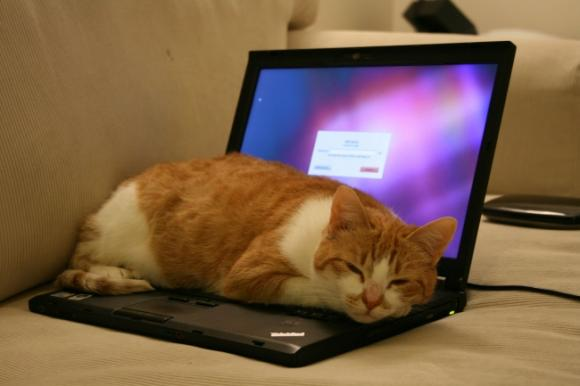 kiến thức, laptop, bảo vệ laptop, việc làm laptop nhanh hỏng, hỏng máy tính,tin tức