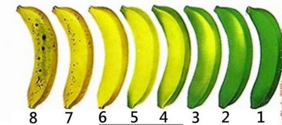 Trong 8 quả chuối này, quả nào nhiều dinh dưỡng nhất? Đa số mọi người đều chọn sai