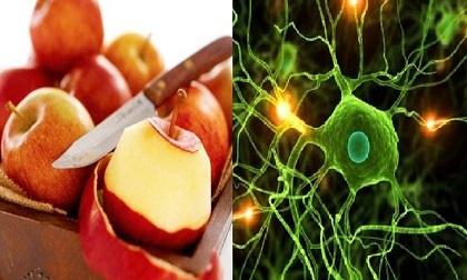 Mộc nhĩ có giá trị sức khỏe cao, tác dụng của mộc nhĩ đối với sức khỏe, 5 loại thực phẩm không nên ăn cùng mộc nhĩ