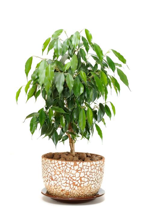 điều trị chứng mất ngủ, trồng các loại cây sau đây trong phòng ngủ để điều trị chứng mất ngủ, 10 loại cây cảnh tốt nhất lọc chất độc trong phòng ngủ