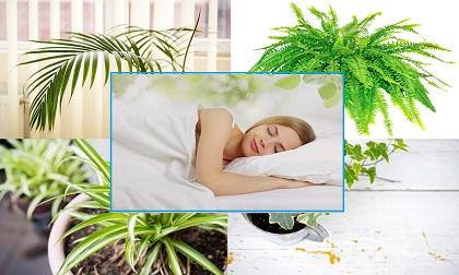 Đặt chậu cây trong phòng tắm, loại cây giúp khử mùi hôi, loại cây thích hợp cho nhà tắm