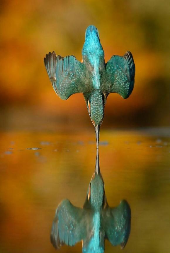 nhiếp ảnh gia, Alan McFayden, ảnh chụp chim