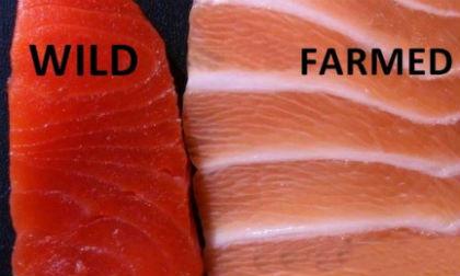 cá hồi, dạy nấu ăn, món ngon cho trẻ