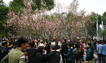 kiệu bay, lễ hội, tung hứng, Nghệ An