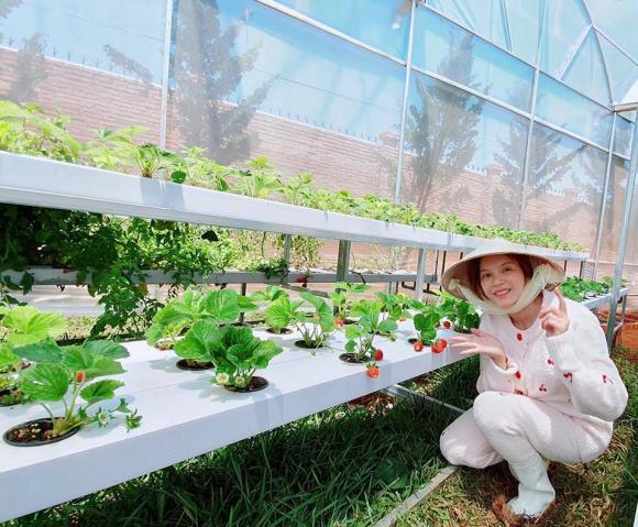 Lý Nhã Kỳ, vườn rau của Lý Nhã Kỳ, sao Việt