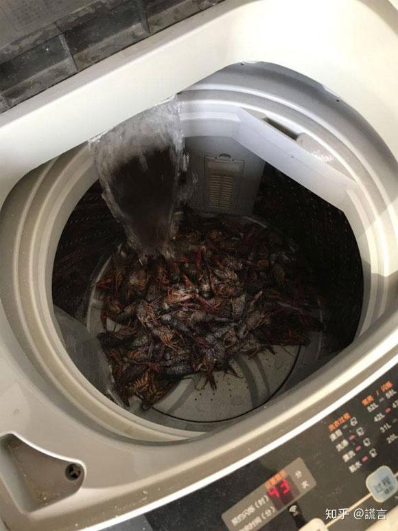 rửa tôm, rửa tôm bằng máy giặt, cách rửa tôm