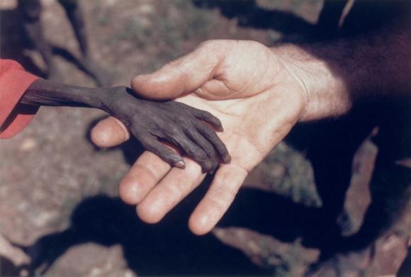 Mike Wells, Bức ảnh bàn tay cậu bé Nigeria, Ảnh báo chí thế giới