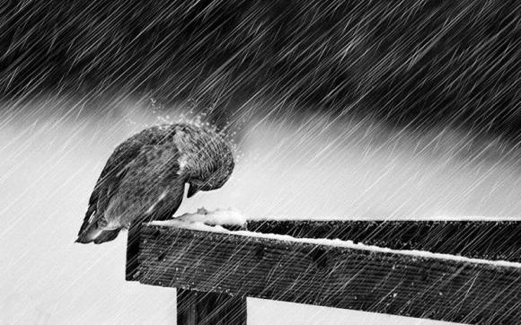 hãy tự đứng lên bằng đôi chân của mình, tuyệt vọng trong cuộc sống, những điều cần biết trong cuộc đời