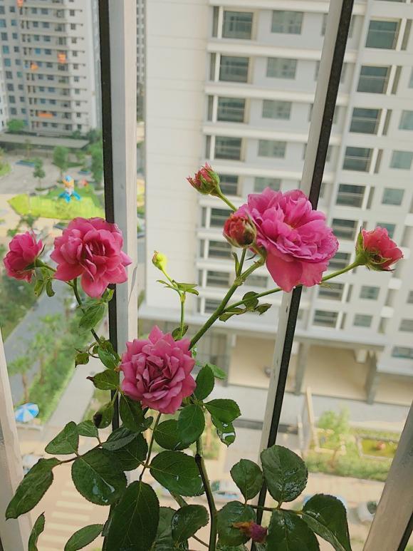 MC Diệp Chi, căn hộ của MC Diệp Chi, sao Việt