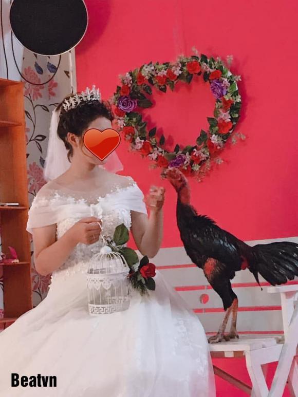 chụp ảnh cưới, đem gà đi chụp ảnh cưới, mê gà chọi, đấu gà chọi