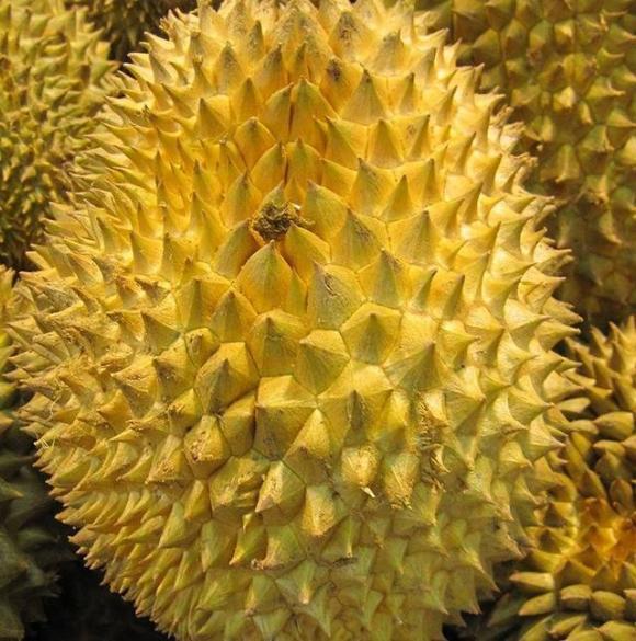 lưu ý khi ăn sầu riêng, ăn sầu riêng đúng cách, thực phẩm kiêng kị với sầu riêng